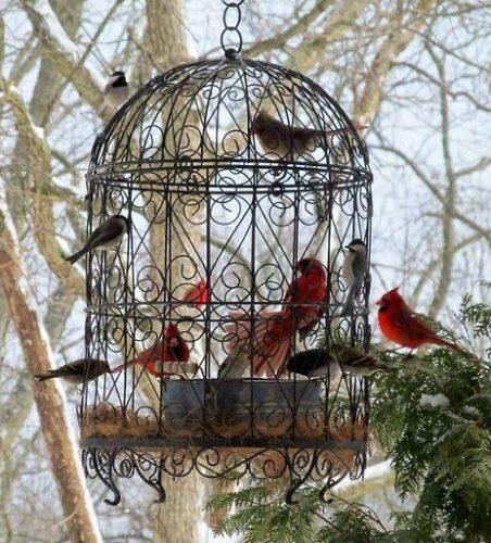 Fugle i og udenfor et bur.